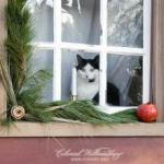 Colonial Williamsburg Cat in Window