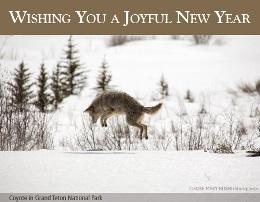NPCA Pouncing New Year.260