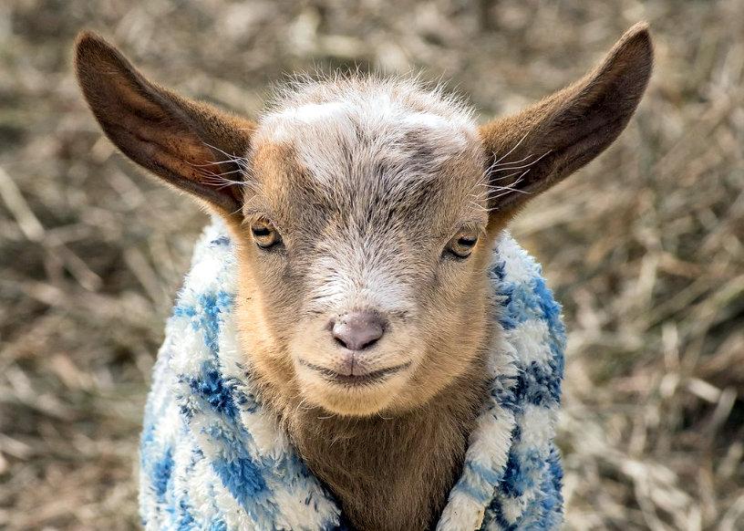 New - Catskill Animal Sanctuary - Greet For Good